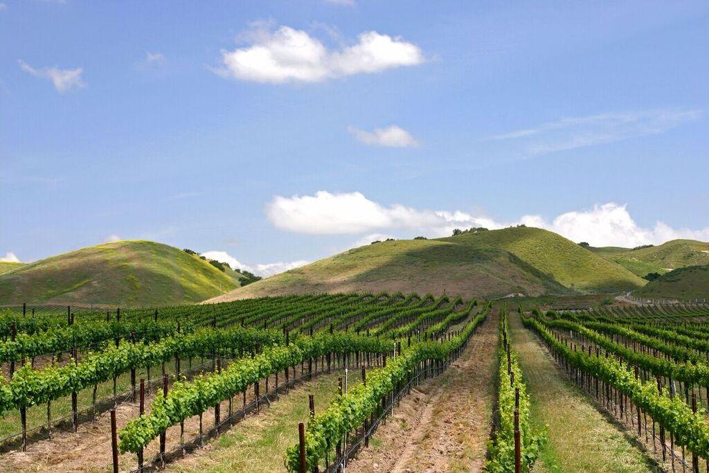Un vigneto e sue file di viti con colline in fondo e clielo blu come sono descritte tanti nel glossario del vino di Wein-Plus. Copyright Foto: Norbert Tischelmayer