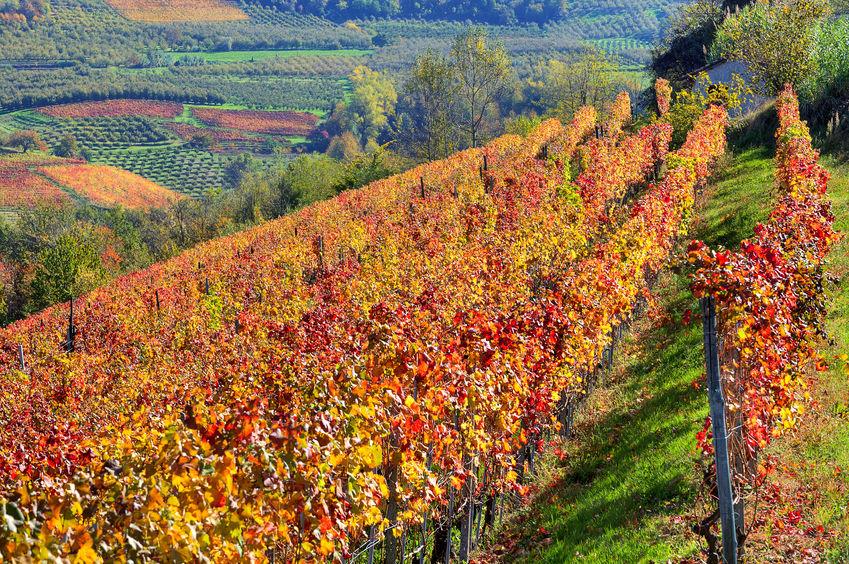 Degustazione Alto Piemonte