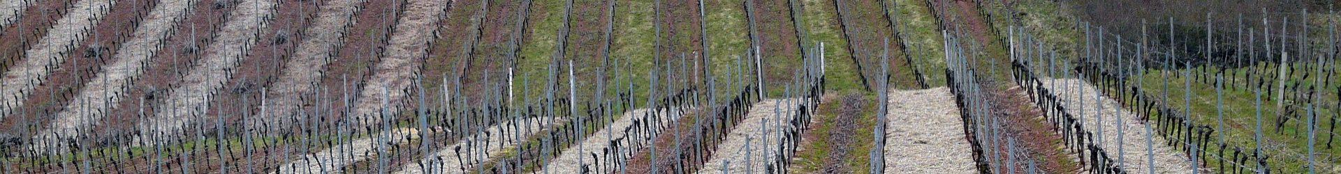 IL network e guida del vino