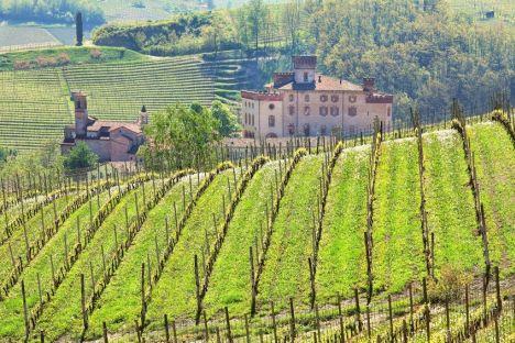 Vista ad un vigneto in Piemonte da cui arrivano le uve del vino più nobile di Nebbiolo per la degustazione Barolo nella pregiata guida di Wein-Plus. Ecco come partecipare alla guida www.wein-plus.it