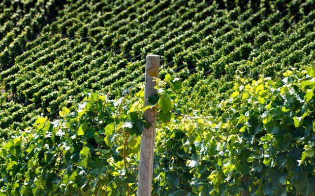 Italia nel focus in Wein-Plus: I Best of 2017