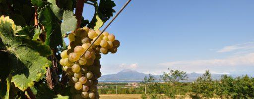 BEST OF Lugana: degustazione speciale Wein-Plus