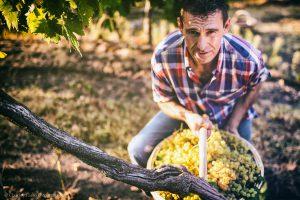 BEST OF Soave: degustazione speciale Wein-Plus
