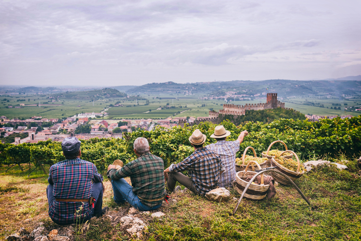 Pausa durante la vendemmia delle uve per il vino Soave con la vista mozzafiato sul paese. Foto: ConsorzioSoave,Charlie Fazio