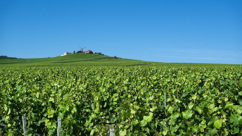 Reims, famosa zona di produzione di Champagne