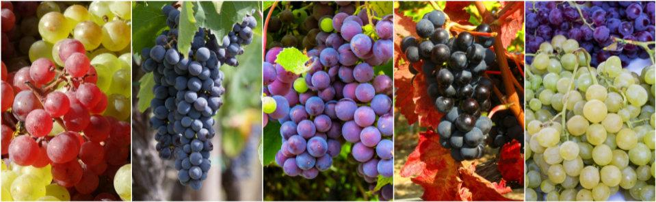 Tutti i vini pronti sono amessi per inviare campioni alla pregiata guida di Wein-Plus.