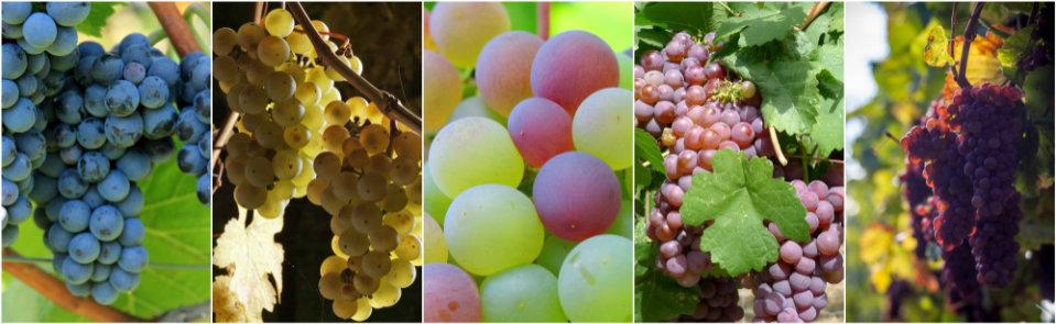 Inviare campioni alla pregiata guida di Wein-Plus. Tutti i vini pronti sono amessi