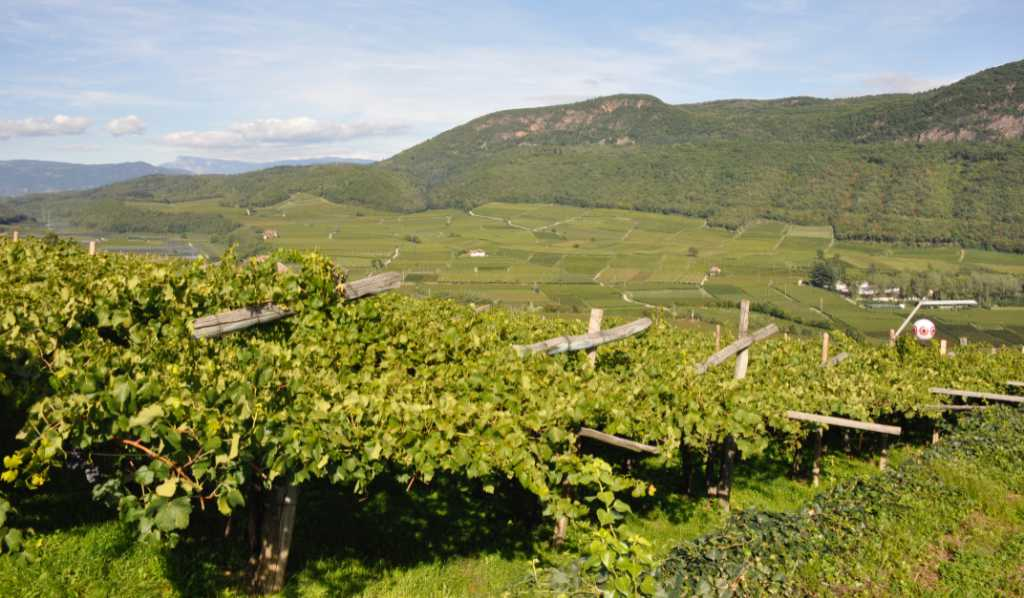 Vigneti a pergola in Südtirol con lo sguardo sulle montagne. Wein-Plus