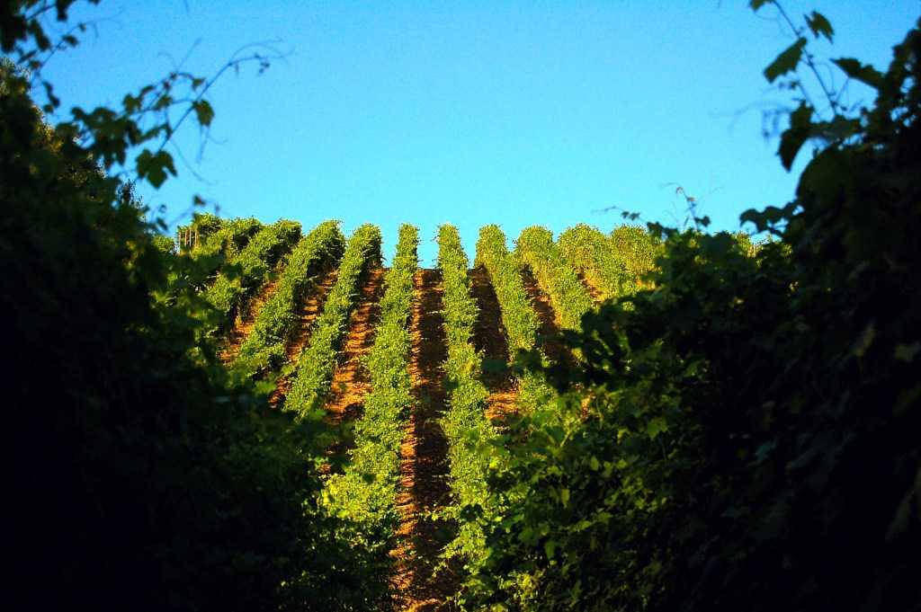 Paesaggio con colline vitate nel Italia del Nord-Ovest. Foto per il BEST OF di wein.plus - degustazione Alto Piemonte 2020