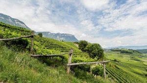 Best of Alto Adige 2021 in wein.plus - qui vedi un tipico paesaggio di montagna del Sudtirolo. Foto: IDM/Südtirol Wein per wein.plus