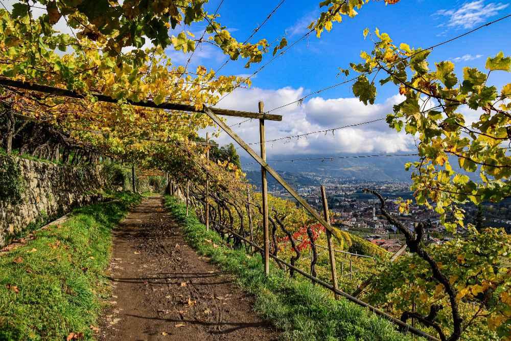 gita tra i vigneti in alto Adige. Foto: IDM/Südtirol Wein per wein.plus per il BEST OF Alto Adige 2021