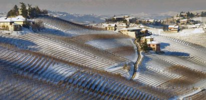 BEST OF Barbaresco 2020