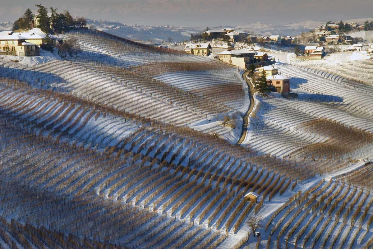 Foto iniziale per il BEST OF Barbaresco di wein.plus - i vigneti della zona in inverno con la neve. Foto Courtesy of Consorzio di Tutela