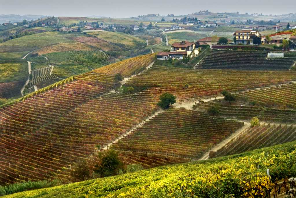 Foto per il BEST OF Barbaresco di wein.plus - i vigneti della zona in autunno. Foto Courtesy of Consorzio di Tutela
