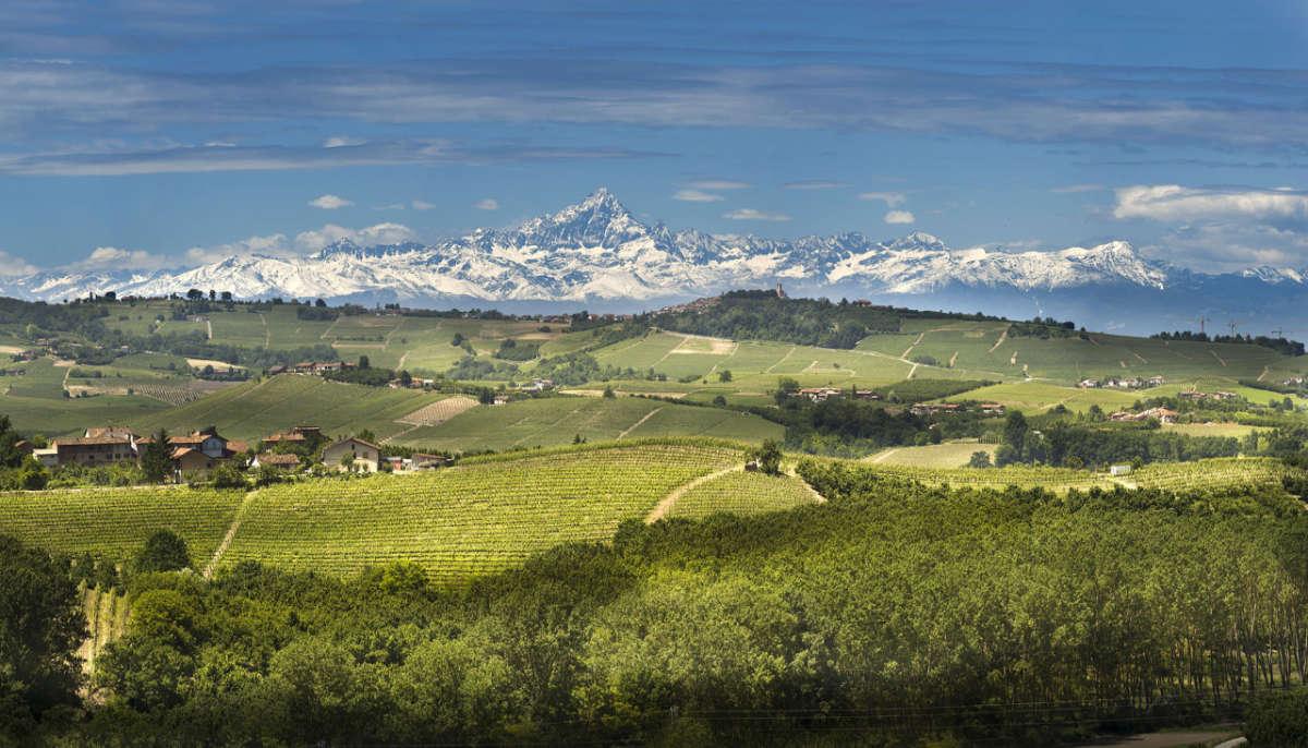 I vigneti nelle Langhe - Panoramica con le montagne in fondo. Foto: Consorzio Tutela Barolo Barbaresco Alba Langhe e Dogliani