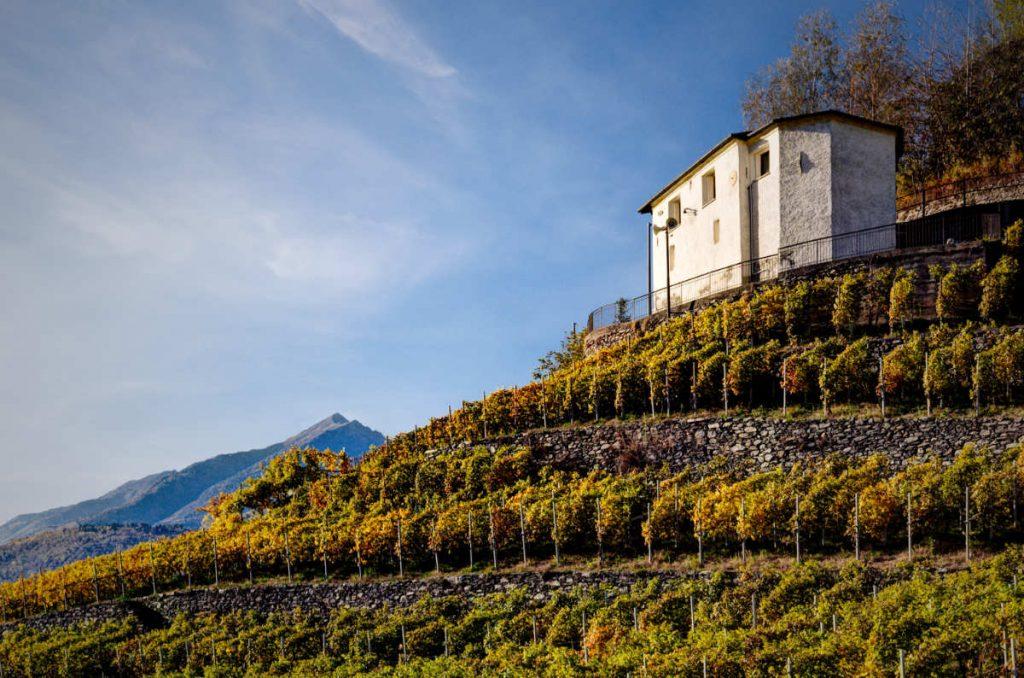 I vigneto di montagna della Valtellina in Lombardia, dove nascono i vini che wein.plus ha degustato per il Best of Valtellina 2021