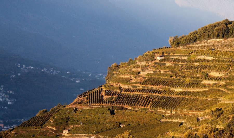 Impressionante la vista sulle terrazze della Valtellina dove crescono le viti per i vin a base di Nebbiolo. Foto per wein-plus per il Best of Valtellina
