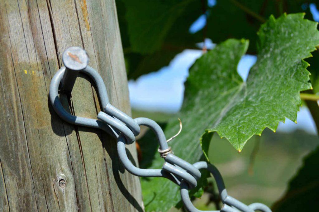 Best of Alto Adige 2018 della guida e network del vino Wein-Plus. Foto: Pixabay