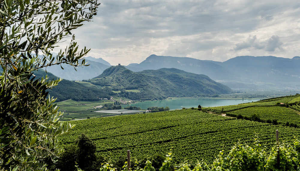 Le degustazioni per il Best of Alto Adige 2018 di Wein-Plus. Foto: © IDM Südtirol/Florian Andergassen