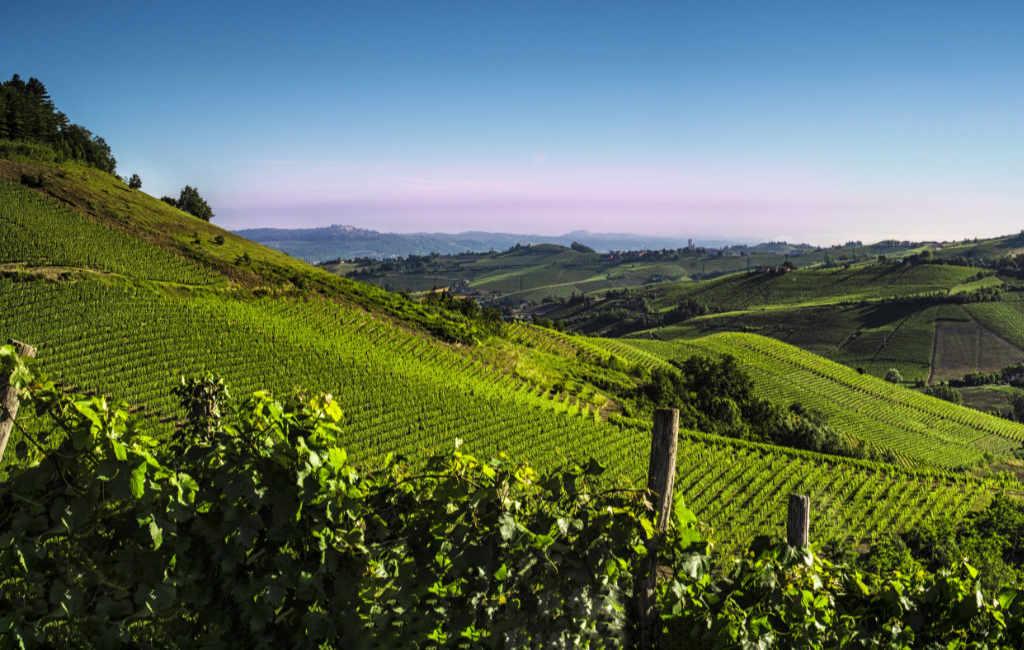Vigneti verdi nella zona di produzione dei vini degustati per il Best of Barbaresco 2019 di Wein-Plus. Foto: Consorzio Barolo Barbaresco