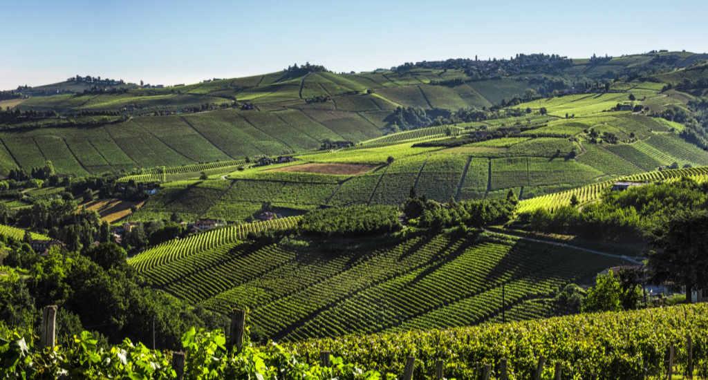 La zona di produzione dei vini per il Best of Barbaresco 2019 di Wein-Plus con gli appezzamenti. Foto: Consorzio Barolo Barbaresco