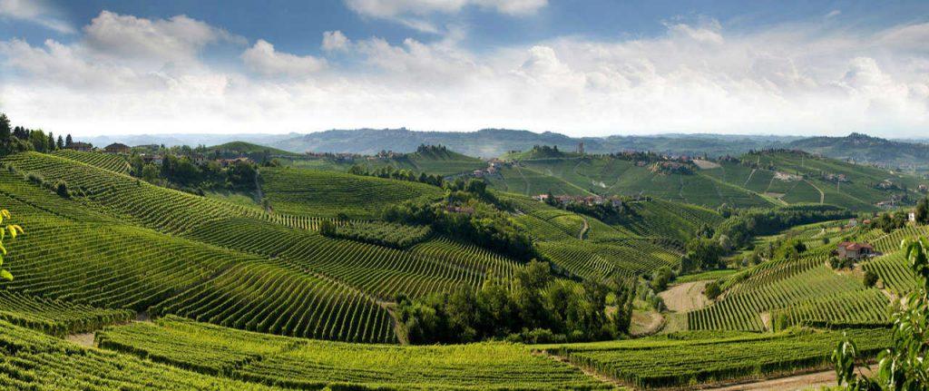 Il Barbaresco in Piemonte. Panaorama del peasaggio con i vigneti. Foto: Tino Gerbaldo. Wein-Plus Italia