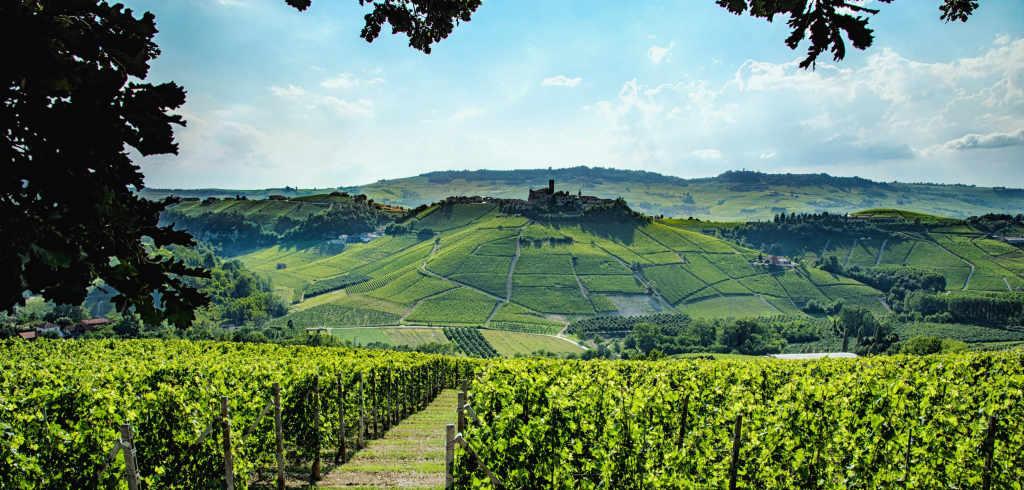 Paesaggio in Serralunga con i vigneti da cui arrivano i vini per la degustazione della guida Wein-Plus: Best of Barolo 2019
