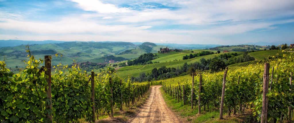 Paesaggio in La Morra con i vigneti da cui arrivano i vini per la degustazione della guida Wein-Plus: Best of Barolo 2019
