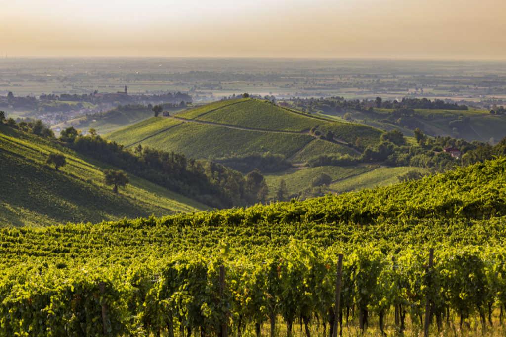 Le colline dell'Oltrepò - Illustrazione per il Best of Bonarda dell'Oltrepò Pavese DOC 2018 di Wein-Plus