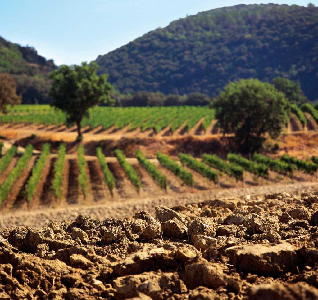La terra è un fattore importante per il Brunello in Montalcino. Foto: Consorzio per Wein-Plus
