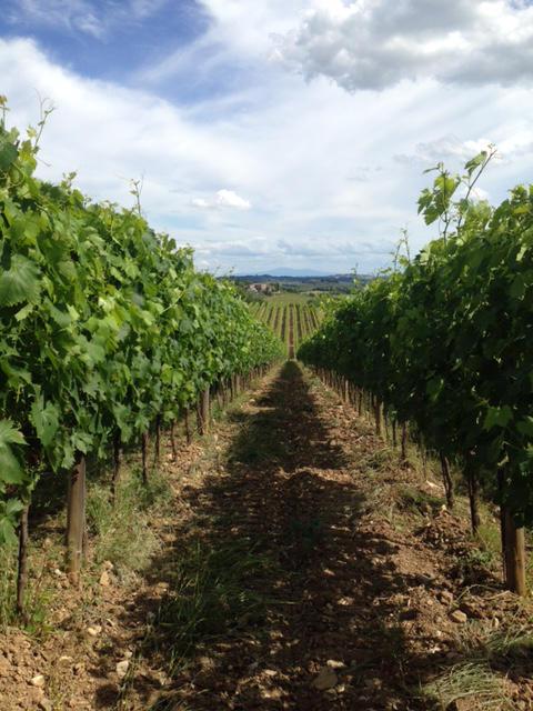 Castellina in Chianti. Vigneti in cui nasce il Sangiovese per i vini del Chianti Classico degustati per il Best of Chianti Classico 2018 della guida Wein-Plus.