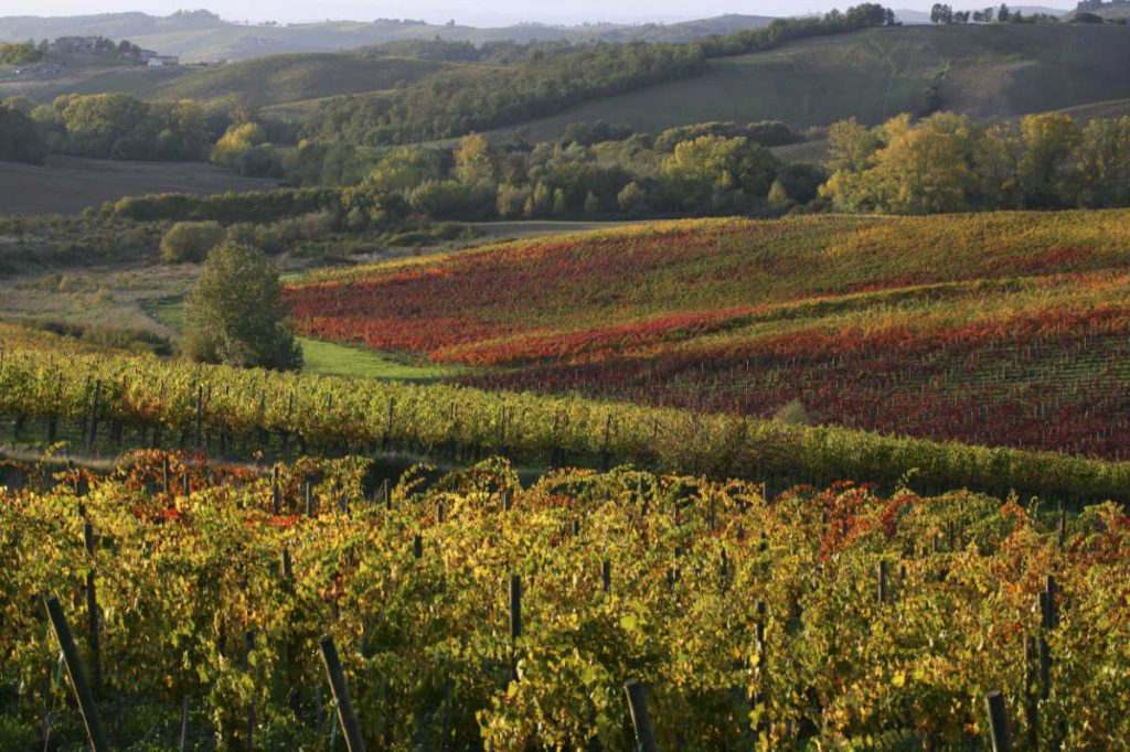 Gaiole in Chianti. Vigneti in cui nasce il Sangiovese per i vini del Chianti Classico degustati per il Best of Chianti Classico 2018 della guida Wein-Plus.