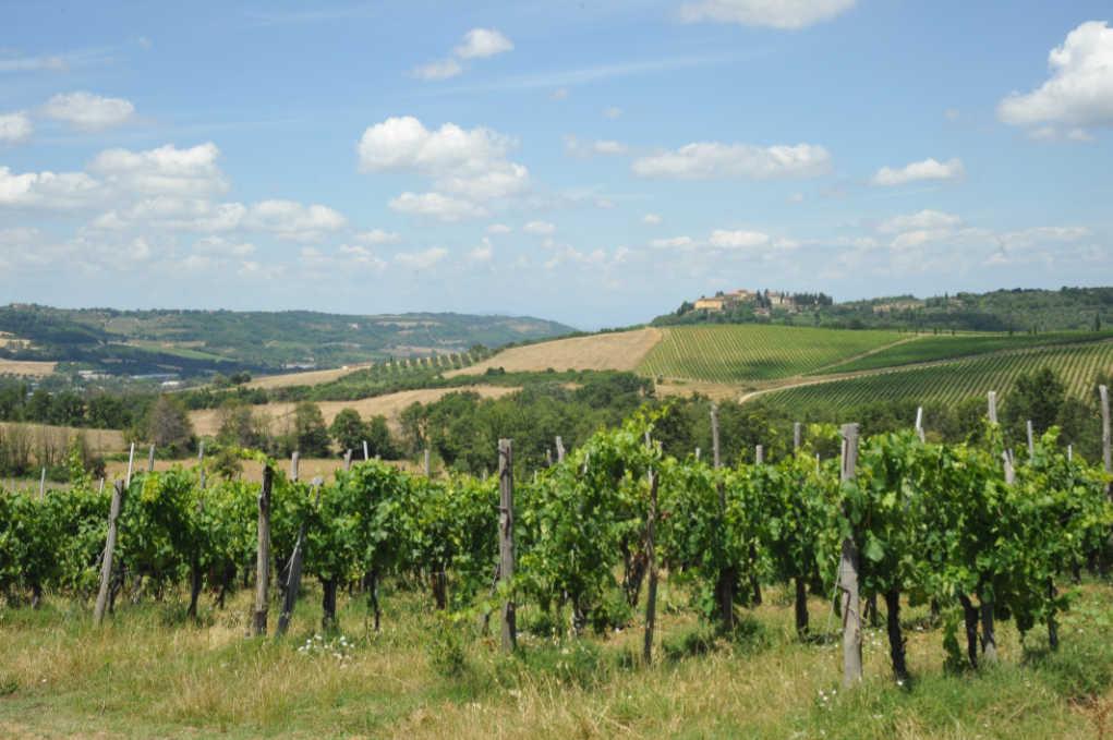 Tavarnelle Val di Pesa. Vigneti in cui nasce il Sangiovese per i vini del Chianti Classico degustati per il Best of Chianti Classico 2018 della guida Wein-Plus.