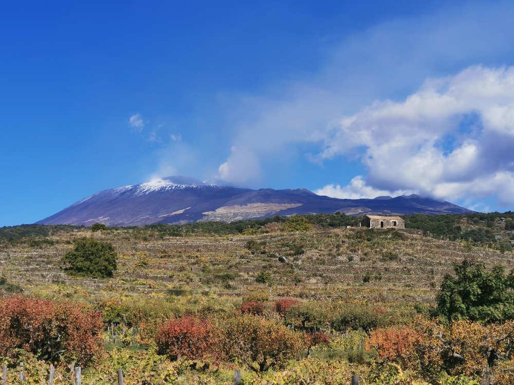Il vulcano domina il paessaggio nella Sicilia occidentale. Foto Consorzio per wein.plus