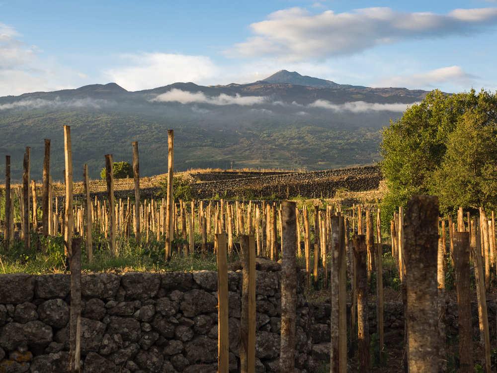 Ecco dove nascono i vini per il BEST OF Etna: Vigneti Cottanera con le mura e in fondo l'etna, il famoso vulcano siciliano. occidentale. Foto per il BEST OF Etna - Consorzio di Tutela Vini Etna DOC per wein.plus