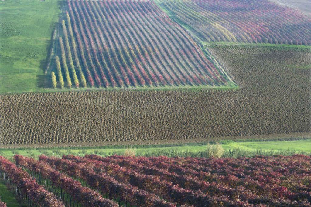 Un paessaggio nella zona di produzione del Lambrusco. Wein-Plus Best of Lambrusco 2018. Foto: Consorzio Lambruschi Modenesi, Carlo Guttadauro