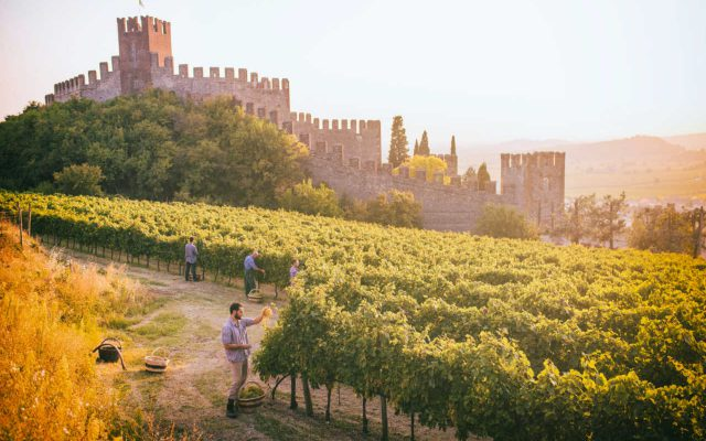 Best of Soave con straordinari risultati nella guida Wein-Plus
