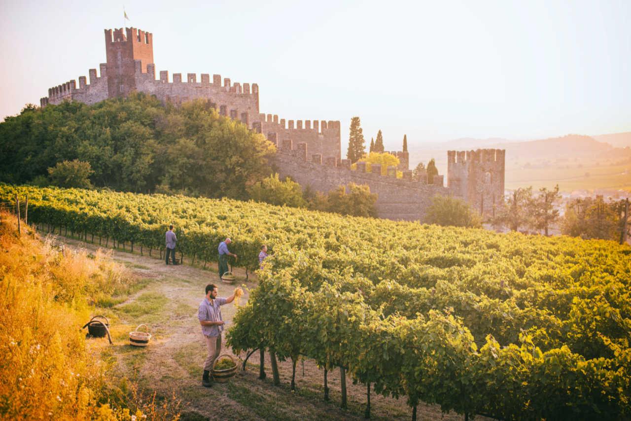 Zona di produzione del Soave con il castello. Foto per il Best of Soave di Wein-Plus
