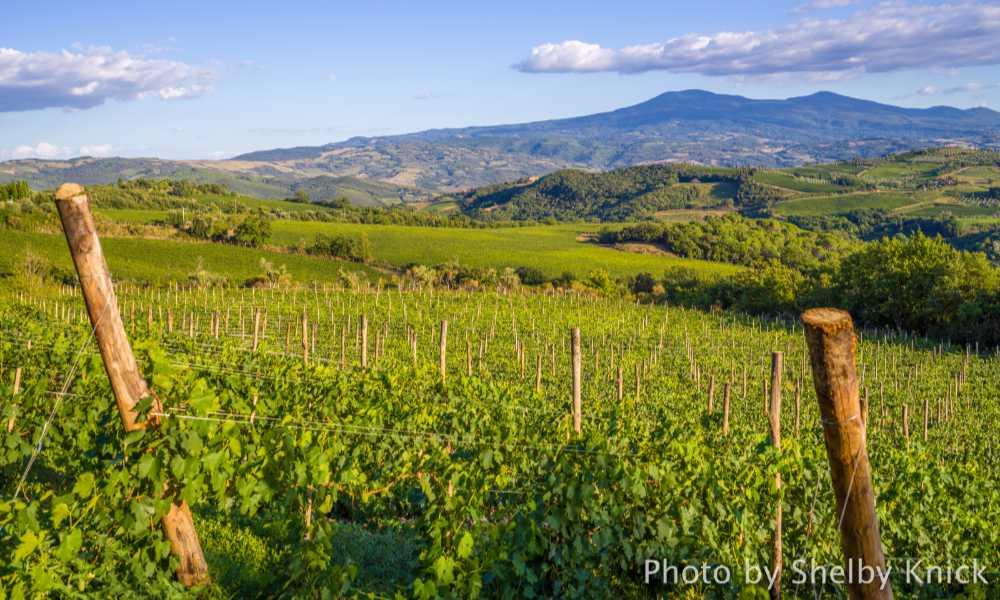 I vigneti della denominazione Brunello di Montalcino. Foto: Shelby Nick/Consorzio del Vino Brunello di Montalcino x wein.plus BEST OF Brunello 2016 e 2015