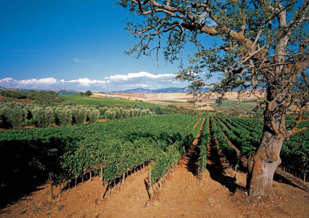 La zona di Brunello - Montalcino il versante sud-est. Foto: Consorzio del Vino Brunello di Montalcino