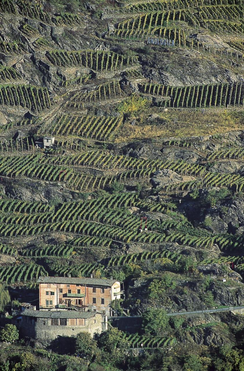 La sottozona di Sassella in Valtellina. Foto: Elio Della Ferrera