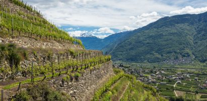 Best of Valtellina: Il Nebbiolo delle montagne