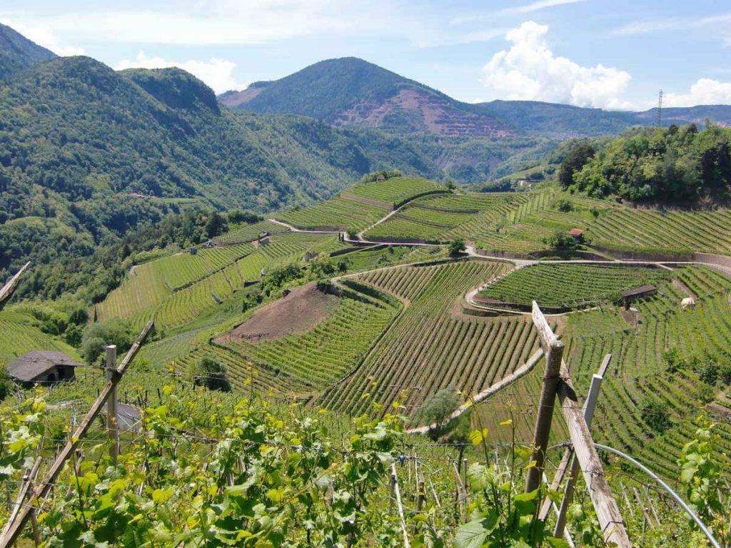 Valle di Cembra dove nasce il Mueller Thurgau. Foto: Katrin Walter per Wein-Plus