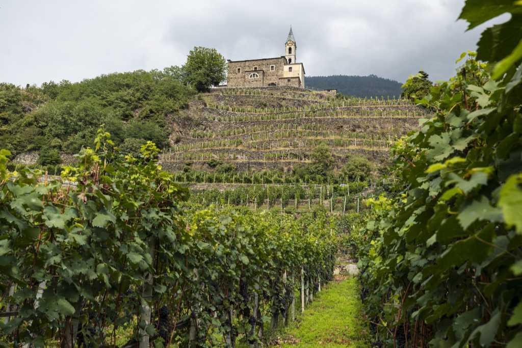 I terrazzamenti in Valtellina. Foto: Cantina Nino Negri per Wein-Plus