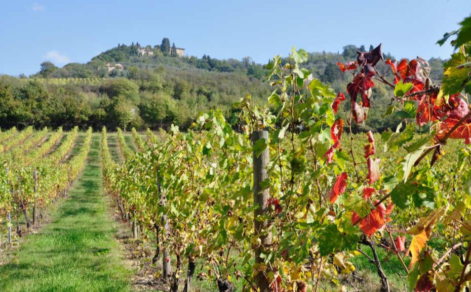 San Casciano e sui vigenti a fine estate, patria del Sangiovese per diventare il famoso Chiantio Classico - wein.plus recensioni vini