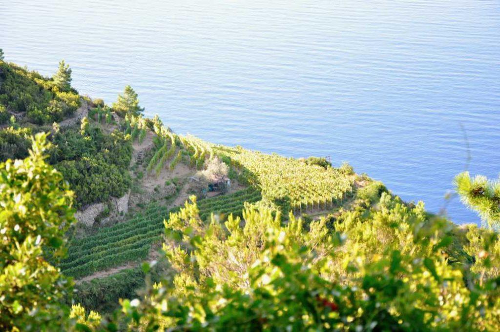 Cinque terre una delle yone di produzione eroica della viticoltura italiana.
