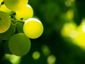 Consere ciò che è buono grazie alla tua membership nel network del vino Wein-Plus