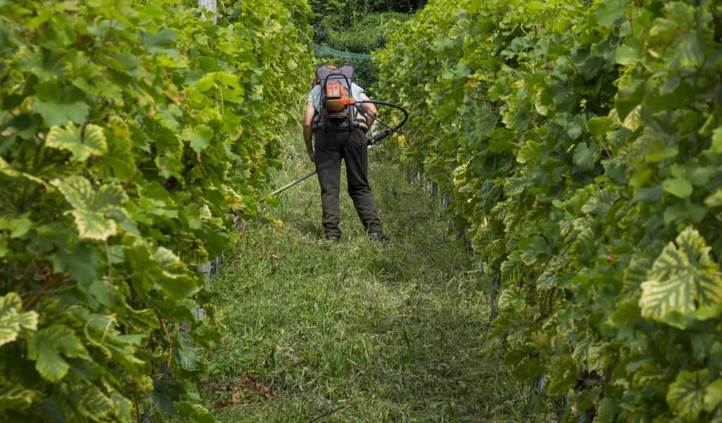 Un agricoltore nella vigna, forse mettendo il rame nella viticoltura biologica. Notizia in italiano nel Blog di Wein-Plus.it