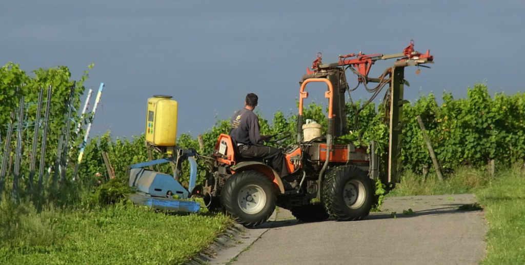 """Un contadino sul piccolo trattore per la vigna. Illustrazione per la notizia """"rame nella viticoltura biologica"""" nel Blog di Wein-Plus.it"""