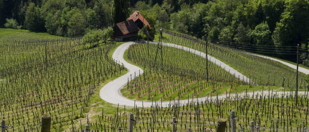 Una strada che fa la forma di un cuore per illustrare il paragrafo sui i vini preferiti della redazione Wein-Plus da quelli degustati per il Best of Brunello 2014 e 2013